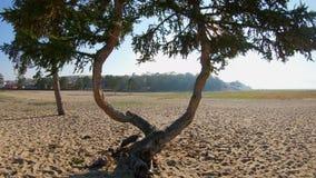 Brummen fliegt durch die schönen seltsamen verflochtenen Bäume stock video footage