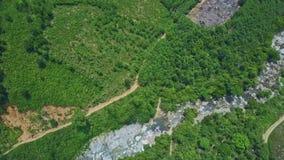 Brummen fliegt entlang Gebirgsstraße durch Schlucht unter Dschungeln stock video footage
