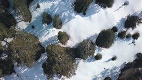 Brummen fliegt oben über Bäume und Boden mit Schnee am sonnigen Tag, Luftschuß stock footage