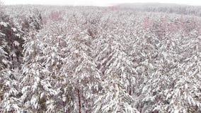 Brummen-Flug über einem Winter-Wald stock video