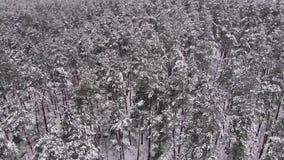 Brummen-Flug über einem Winter-Wald stock video footage