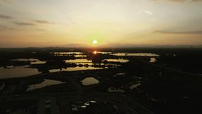 Brummen geschossen von einem Sonnenuntergang stockfotos