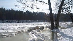 Brummen langsam flyes vom Ufer zu gefrorenem Fluss durch die Bäume Abschluss oben stock video footage