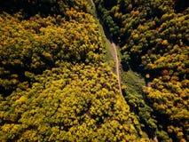 Brummenansicht des erstaunlichen bunten Herbstfallwaldes bei Sonnenuntergang Lizenzfreies Stockbild