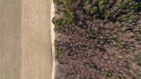 Brummenflug über Fallwald Federblätter und Bäume stock video