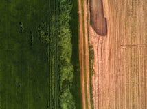 Brummengesichtspunkt auf bebautem Weizenfeld lizenzfreies stockbild