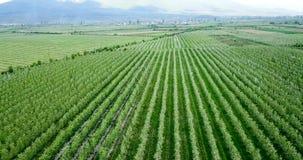 Brummenphotographie, Vogelperspektive von Obstgärten resen herein, prespa, Macedonia stockfoto