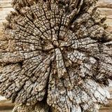 Brun bakgrund för tappning av det spruckna avsnittet av gammal retro torr wood textur Royaltyfria Foton