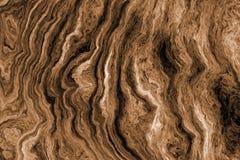 Brun bakgrund med trädet rotar modellen Royaltyfria Foton
