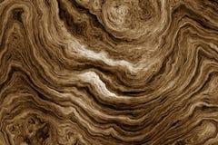 Brun bakgrund med trädet rotar modellen Arkivfoto