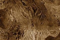 Brun bakgrund med trädet rotar modellen Royaltyfria Bilder