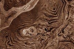 Brun bakgrund med trädet rotar modellen Fotografering för Bildbyråer