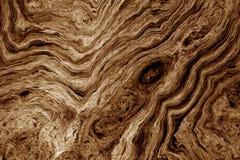 Brun bakgrund med trädet rotar modellen Arkivbilder