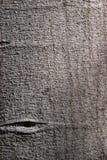 brun bildtree för bakgrund Royaltyfri Bild