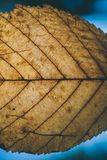 Brun bladtextur och bakgrund Makrosikt av torr bladtextur Organisk och naturlig modell abstrakt textur och bakgrund Arkivfoton