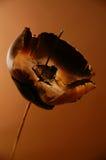 brun blomma Arkivbild