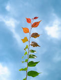 Brun coloré multi de vert de phénomène de feuilles jaune-orange au rouge photos libres de droits