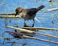 brun d'oiseau Image stock