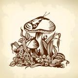 Brun de champignon Photo libre de droits