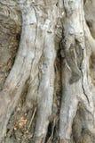 Brun de racines Image stock