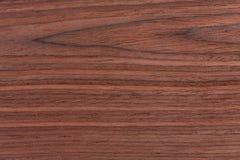 Brun detalj för färgnaturmodell av rosenträt royaltyfri bild