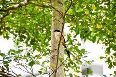 Brun fågel på en trädfilial Royaltyfria Bilder
