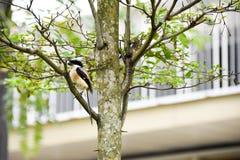 Brun fågel på en trädfilial Arkivfoton