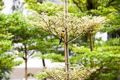 Brun fågel på en trädfilial Fotografering för Bildbyråer