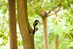 Brun fågel på en trädfilial Arkivbild