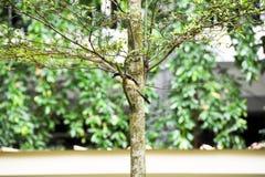 Brun fågel på en trädfilial Arkivfoto