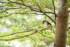 Brun fågel på en trädfilial Royaltyfri Fotografi