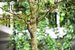 Brun fågel på en trädfilial Royaltyfri Bild
