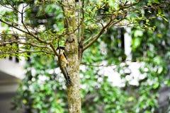 Brun fågel på en trädfilial Royaltyfri Foto