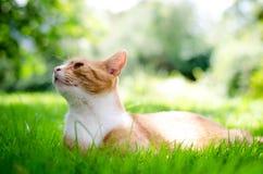 brun förälskelse för katthjärtaillustration Arkivbilder