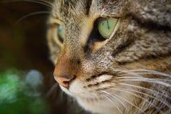 brun förälskelse för katthjärtaillustration Arkivfoto