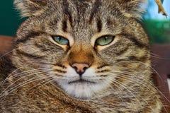 brun förälskelse för katthjärtaillustration Arkivfoton