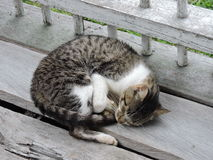 brun förälskelse för katthjärtaillustration Royaltyfri Foto