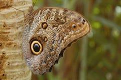 brun fjäril Arkivbilder