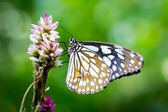 Brun fjäril och blomma i trädgården Arkivfoto