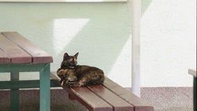 Brun fluffig katt som lägger på träbänken som omkring ser lager videofilmer