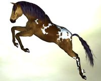 Brun foncé de cheval avec une crinière bleue image libre de droits