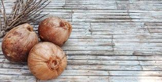 Brun gammal kokosnötfrukt arkivfoto