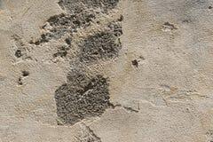 brun gammal vägg Royaltyfria Bilder