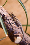 Brun gecko Arkivbilder