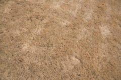 Brun gräs- bakgrund Royaltyfri Fotografi