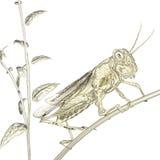 brun gräshoppa Arkivbild