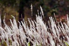 Brun grässlätt. Royaltyfri Foto