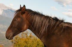 Brun häst för vuxen människa med dess vapen som skiner i solen royaltyfri bild