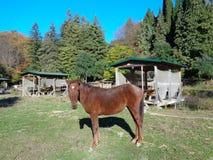 Brun häst i ängen, härlig höstnatur Arkivbild