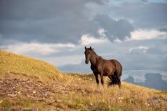 Brun häst i bergkulle Arkivbild